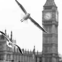 Flying to London (Ray Zandvoort!) Tags: uk london dutch towerbridge square photography flying unitedkingdom camden 85mm londoneye piccadillycircus shard camdentown whitehall londoncity 1x1 jubileegardens theflyingdutchman rayzandvoort rayzr