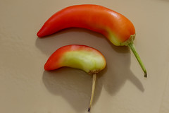 Hot Green (Nick.Ramsey) Tags: canonef100mmf28lmacro chilli eos7dmarkii food macro nickramsey plant red green homegrown hot orange yellow