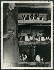 Archiv G353 Kaninchenzucht, 28. November 1940 (Hans-Michael Tappen) Tags: hase tier kaninchen hasen tierfoto schrze tierliebe kaninchenstall zchter tierfreunde hasenstall tierfreund archivhansmichaeltappen kanichenstall stallschrze