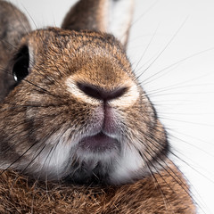 Face (Jeric Santiago) Tags: pet rabbit bunny animal conejo lapin hase kaninchen   winterrabbit