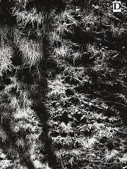 the darkest hour (Danny 666) Tags: dark darkest darkness hour