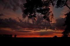 Sunset IMGP8657 (horschte68) Tags: usedom insel isle balticsea summer sommer urlaub vacation holiday outdoor aussen aussicht sunset mood scenery sonnenuntergang kiefern pine tree outlook ausblick panorama pentaxart pentaxk50 smcda1645mm40edal wideangle wideopen