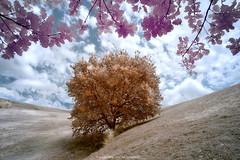 Albero (simone@magicaries.com) Tags: nikon d600 infrared pollastrini simone infrarosso albero color colore