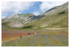 Castelluccio (Romina Tripaldi) Tags: italia italy umbria castelluccio norcia fiori flowers montagna mountain color landscape prato colors natura