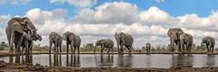 s AT Elephants at waterhole_Panorama1 (Andrew JK Tan) Tags: 2016 safari botswana mashatu wildlife nature elephants