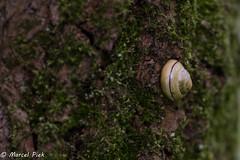 Klein Profijt - Rhoon (CapMarcel) Tags: klein profijt rhoon rotterdam getijden gebied
