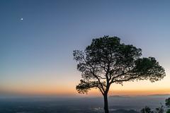 Tree Silhouette | Mallorca | Spain (www.jacktheflipper.de) Tags: fotografie photography landscapes landscape landscapephotography tree trees silhouette nature sunset mallorca spain europe sony colors sky blue hour golden