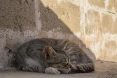 Enjoying the shadow (Ricky Bay) Tags: cat essaouira morocco shadow