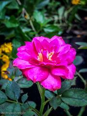 IMG_8875-4 (Reynaldo Mondragon) Tags: flowers gomez farias selvatic vegetation reymondragon