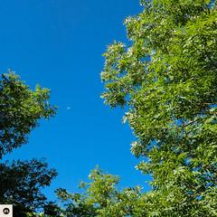 02c2016 (photo & life) Tags: lacouvertoirade larzac colors fujifilm fujinon fujinonxf18mmf20r fujifilmxpro2 xpro2 france europe aveyron jfl photolife photography square squareformat squarephotography lune moon tree templiers