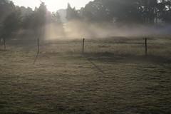 Santpoort Noord (Sean Anderson Classic Photography) Tags: sony a700 carl zeiss jena 58mm f2 biotar sonya700 58mmf2 santpoortnoord mist earlymorning cycling