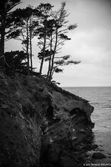 Point Lobos Trees (tom911r7) Tags: leica sl fine art ocean tom911r7 trees noctilux camera akademieusa black white thomas brichta landscape bw point lobos rocks blackandwhite fineart leicaakademieusa leicacamera leicasl pointlobos thomasbrichta