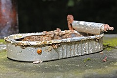 Stillleben an der Pader 10 (DianaFE) Tags: dianafe dianae stillleben mll makro abfall mllkunst tiefenschrfe schrfentiefe