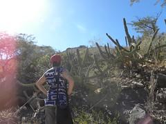 baja-0375 (Robby's Sukkulentenseite) Tags: bajasur cacti cactus fnrrb1043 gummosus heike ka1304s kakteen kaktus licht mexiko rb1043 reise standort stenocereus topxlandschaft vtr1