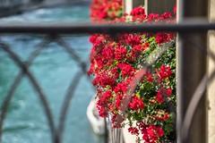 On the Bridge (*Capture the Moment*) Tags: zeissbatis1885 wetter tor switzerland sun summer sonya7ii sonne sommer schweiz pflanzen fotowalk flowers details dof bokeh blumen blume berne bern bokehlicious 2016
