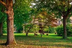 Garden -explored- (Sergio '75) Tags: garden colors colorful trees summer canon canoneos70d canonef2470mmf4lisusm ef2470mmf4lisusm italy italia acer ginkgobiloba shades sergio75 sergio