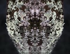 145/365 (ana.sousa129) Tags: texture symmetry tree nature macromond macromonday macromondays pond golden sunset white art pink new cool beautiful macro garden