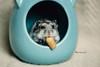 hamster chloe (The Gaggle Photography | Jessica Nelson) Tags: hamster macro macrohamster pet animals wildlife nature jessicanelson gagglephotography