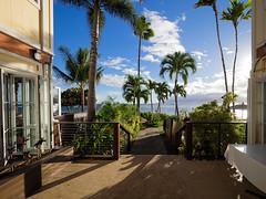 The amazing light of Maui (Jon Wojan) Tags: olympus omd em1 omdem1 sunset sundown atardecer cielo light maui lahaina palms palm tree trees tropic tropics pacific ocean sky clouds atmosphere tropical vacation scenic