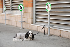 Dog parking (J-Fish) Tags: dog dogparking parking jeantalonmarket pet montreal qubec canada d300s 1685mmvr 1685mmf3556gvr