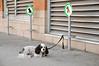 Dog parking (J-Fish) Tags: dog dogparking parking jeantalonmarket pet montreal québec canada d300s 1685mmvr 1685mmf3556gvr