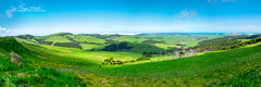 Cape Reinga Meadow (sactyr photography) Tags: newzealand panorama green cattle sheep meadow northisland lush northland capereinga