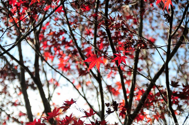 福壽山農場楓紅-19