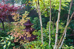 Another autumn view of the woodland lower garden (Four Seasons Garden) Tags: fourseasonsgarden