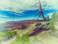 Bryce Canyon National Park (K r y s) Tags: utah unitedstates hdr