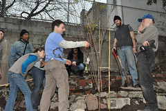 instruct (greenelent) Tags: nyc brooklyn garden farm local organic fruittrees planttrees prospectfarm treesny