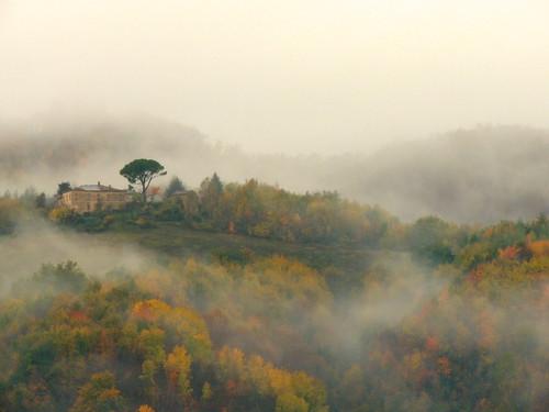 La nebbia... (rospex)