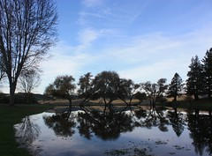 Duck Pond, Marin Cheese Factory (Gunn Shots (On and off these days)) Tags: california autumn trees fall pond marincounty marincheesefactory