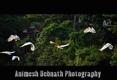 joy of freedom (Animesh2000) Tags: ocean road blue light sunset red sea orange cloud india flower macro reflection art home nature floral beautiful leaves birds night photography mono pattern artistic dusk wildlife kerala photograph stork calicut animesh debnath