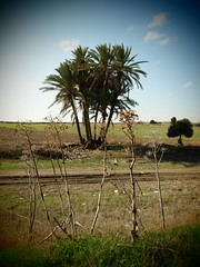 LARNACA 01 (liontas-Andreas Droussiotis) Tags: cyprus olympuspen larnaca droussiotis liontas