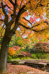 Late Autumn / Kyoto, Japan (yameme) Tags: travel japan canon eos maple kyoto   kansai    kyotobotanicalgarden  24105mmlis 5d3 5dmarkiii