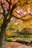 秋紅堆滿天 Late Autumn / Kyoto, Japan (yameme) Tags: travel japan canon eos maple kyoto 京都 日本 kansai 旅行 關西 楓葉 kyotobotanicalgarden 京都府立植物園 24105mmlis 5d3 5dmarkiii
