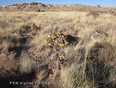 November Vacation 2012 AZ / Arizona Painted Desert Petrified Forest 34 (pmadsidney) Tags: california arizona nationalpark route66 painteddesert petrifiedforest interstate40