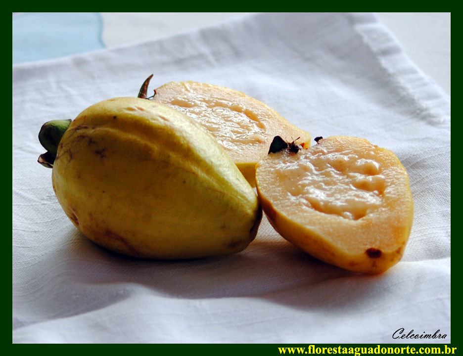 The World's newest photos of guava and myrtaceae - Flickr