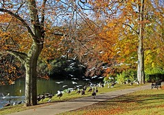 In The Park (alphazeta) Tags: park autumn trees colours gulls canadageese photomix