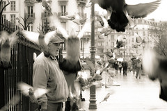 .. (Ellie O. Photography) Tags: man paris france bird sepia europe pigeons streetphotography moment        stphotography  dreamymoments