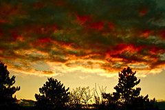 Fiery Sky (Eli Adams Photography) Tags: trees sunset red sky orange sun nature silhouette yellow pine clouds yard canon landscape rebel xt solar colorful flickr branches trunks comments vt fiery eosdigital pawlet