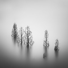 six trees (StephenCairns) Tags: longexposure blackandwhite bw japan treetops filter 日本 木 水 blackandwhitephotography ndfilter 白黒 白黒写真 gndfilter neutraldensityfilter submergedtrees 岐阜県 長時間露出 leefilters graduatedndfilter stephencairns 徳山ダム tokuyamadam leegraduatedfilters hitechprostopndfilters 長い時間露出 achangeofstates
