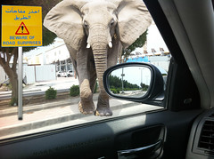 Beware of road suprises (Abdullah Rashed - KWT ( excuse 4 slow replies)) Tags: elephant car photoshop warning fun idea drive safety note secure kuwait care abu الله careful saleh rashed abdullah عبدالله سيارة راشد slh تحذير الكويت صالح أبو كويتي فوتوشوب قيادة فيل يحفظكم worldcars آمنة 2dec2012 arabautoblog إنتباه موتورنيوز أراباوتوبلوق