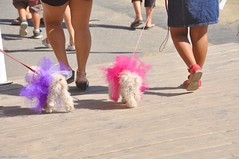 Twins (etgeek (Eric)) Tags: silly dogs twins dresses colored fofo oldtownsacramento n6oim 9682742