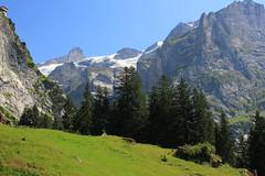 Upper Grindelwald glacier.