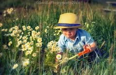 Lil Explorer (savillent) Tags: portrait field flowers daisy children hat summer nikon saville tuktoyaktuk northwest territories canada travel home sweet july 2016