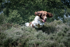Dog Photography by Gerry Slade-2846 (Photography By Gerry Slade) Tags: dogphotographer gerryslade wwwgerrysladecouk