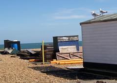 By-the-sea-3 (SusanDriver) Tags: beach sea gulls