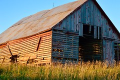 Missing a few teeth (John Dame) Tags: nebraska corn b1b farm countryroads cornrows church harvest