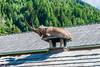 DSC_9608 (Costi Jacky) Tags: france naturereserve parcdemerlet